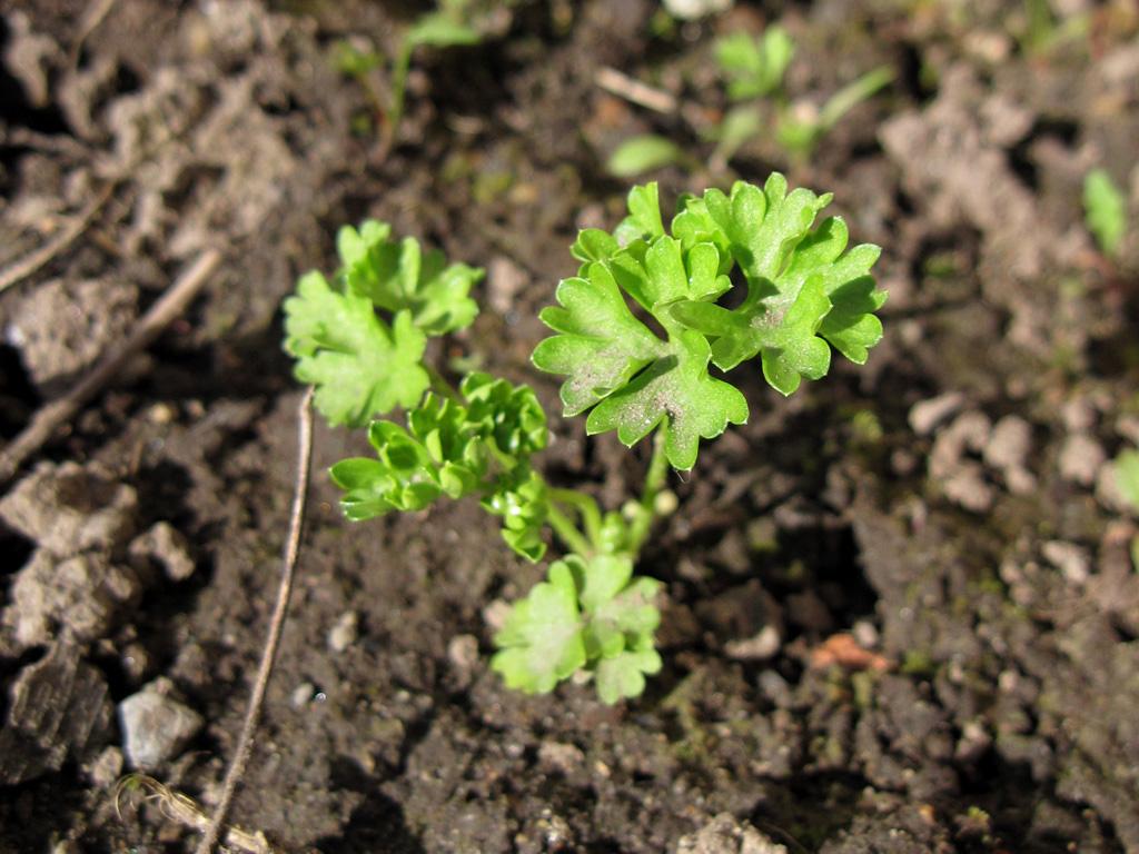 miahalf's garden photos - May 2010